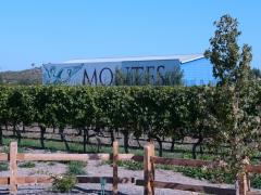 Chile Winery