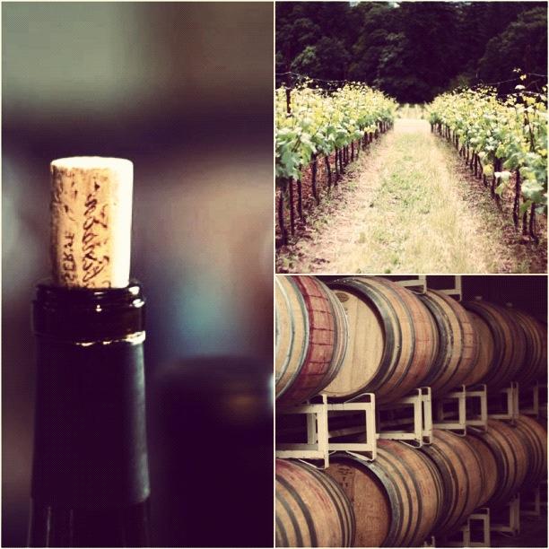 torrontes-vineyard-bottle